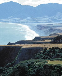 Cape Palliser tile