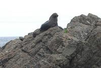 Seal at Cape Palliser, Wairarapa