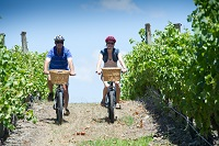 Cycling the vines in Martinborough