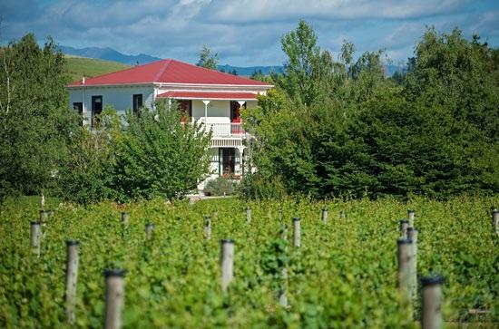 Gladstone Vineyard, Wairarapa