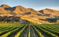 Gladstone vineyards