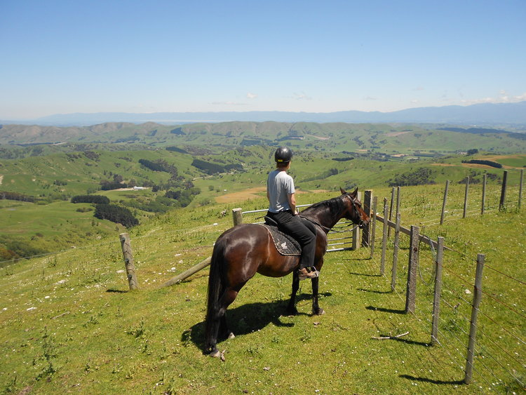 The great view from Gladstone Horse Treks