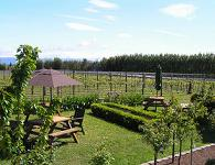 Tasting area in the vines