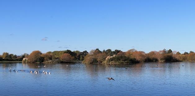 Henley Lake, Masterton