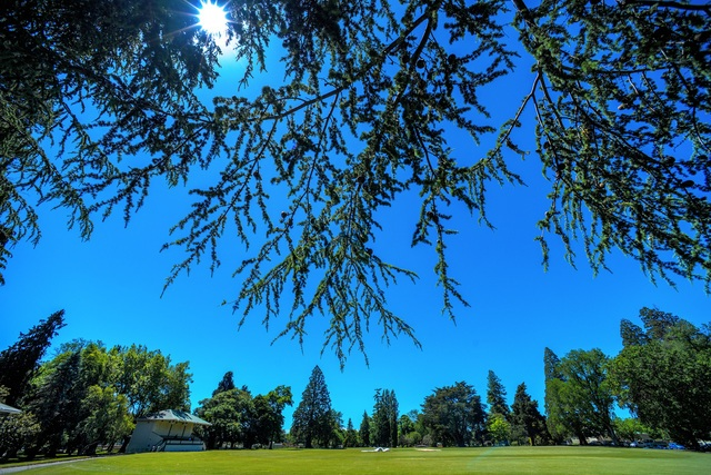 Take a tree walk at QE Park