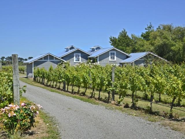 Stonecutter vineyard, Martinborough