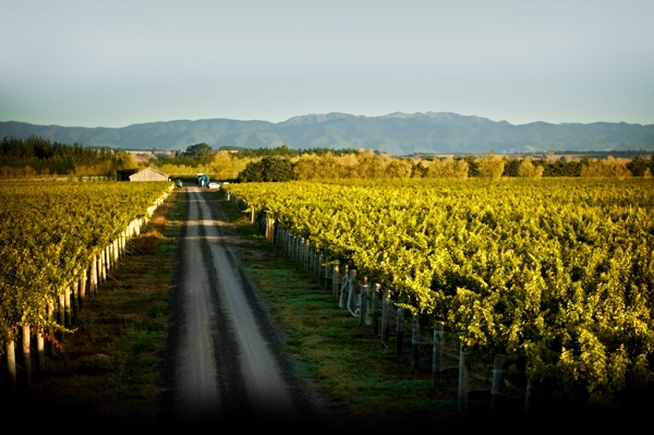 Palliser Estate Wines, Martinborough