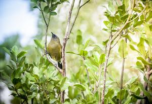Pukaha Mount Bruce National Wildlife Centre