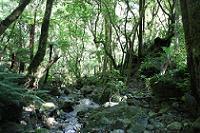 Mountain stream on the Barra Track