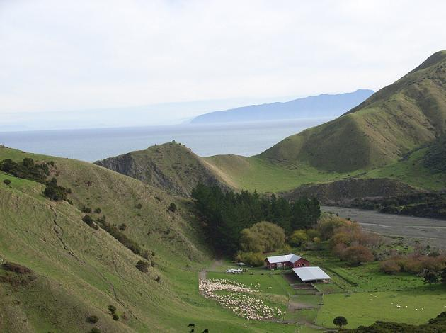 Spectacular view across woolshed to Palliser Bay