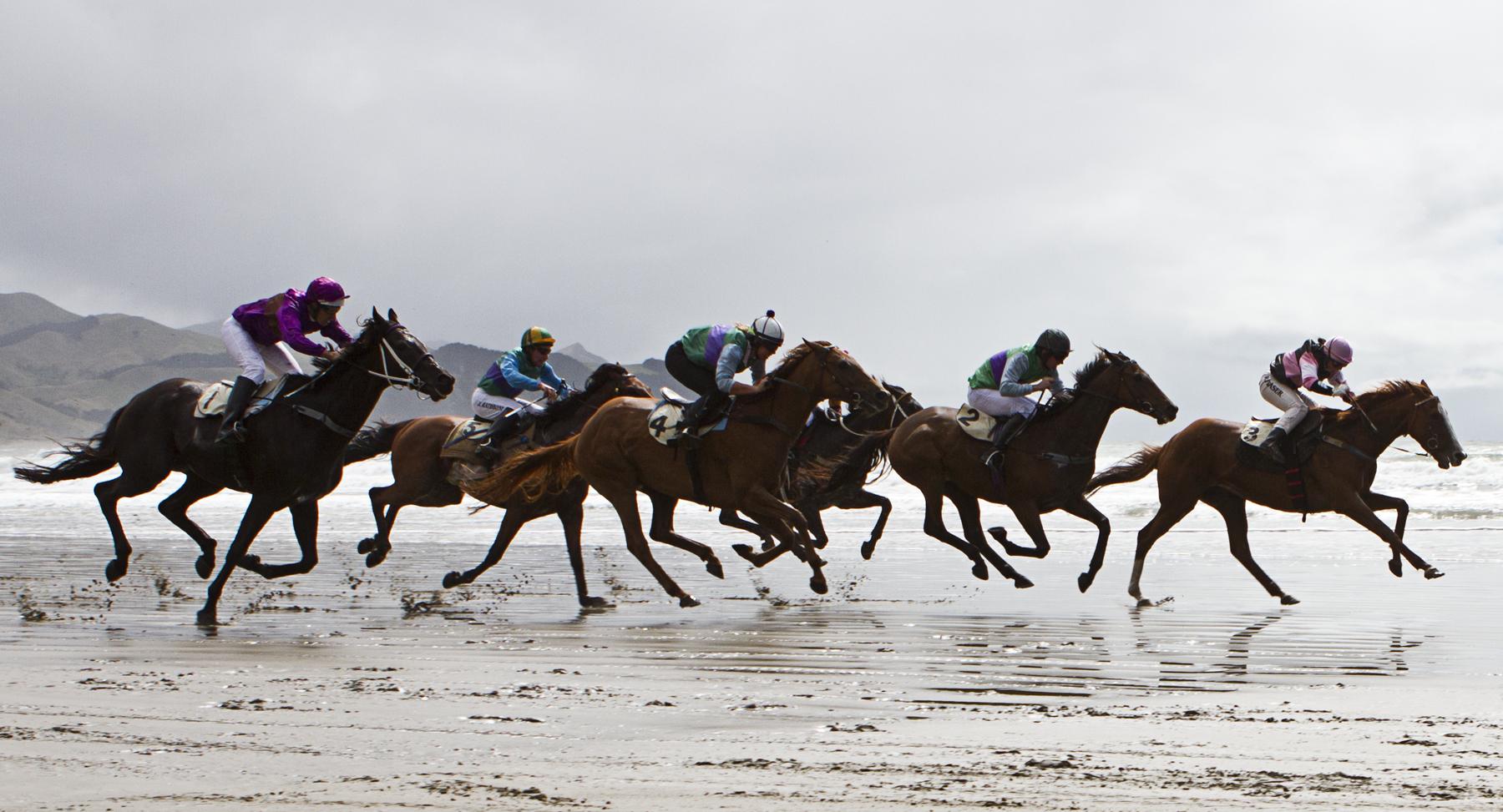 Castlepoint Beach Horses Races