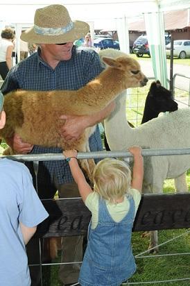 Baby alpaca CUTE!